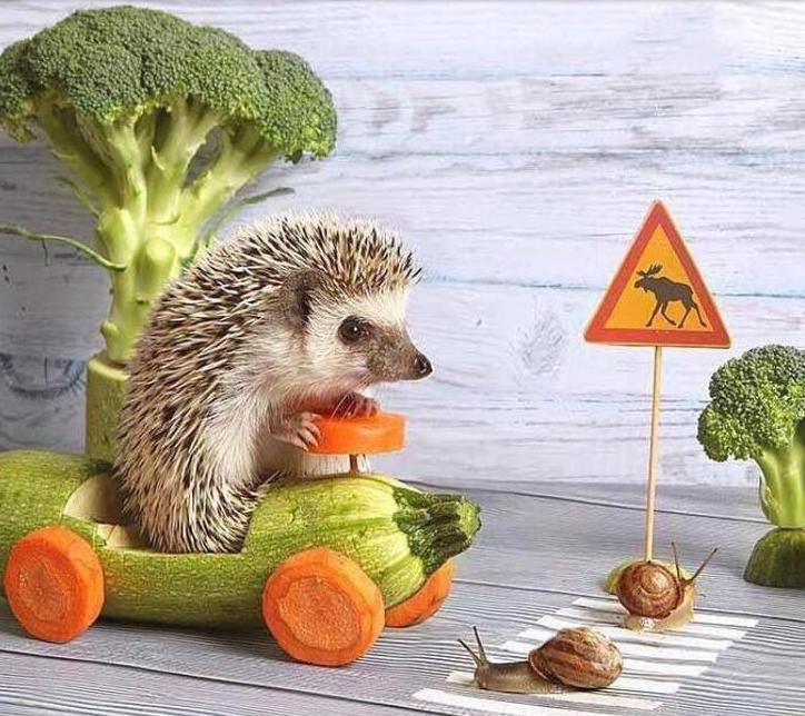 Vegan Road Trips