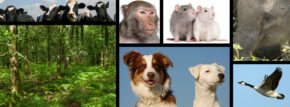 Alliance for Animals