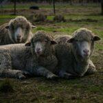 Citizens United for Animals (CUFA)